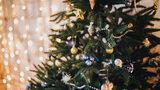 Co dělat, aby vánoční stromeček vydržel: Kupte co nejdříve a zalévejte