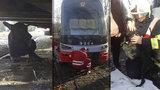Psí drama ve Stromovce: Štěně vběhlo pod jedoucí tramvaj, málem ho rozdrtila