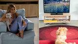 Psí televizní závisláci: Naučili se to od svých pánů