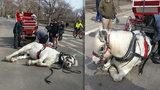 Tvrdý byznys: Kůň padl vyčerpáním, když vozil turisty po městě