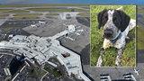 Na letišti bez milosti zastřelili štěně. Zpozdilo lety, lidé teď zuří