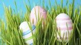 Kdy zasít osení, aby vám vyrostlo do Velikonoc? Právě teď!