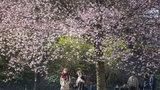 V Klementinu padl rekord: Letošní březen byl druhý nejteplejší za 242 let