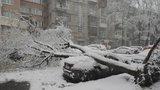 Němci rozhání mráz vrtulníky, Švýcaři topí hroznům: Zima překvapila Evropu