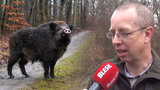 Zemědělec Havlát radí Praze, jak na přemnožené divočáky. Radní se do něj tvrdě opřela