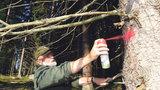 Zvrat v boji s broukem? Čeští výzkumníci úspěšně testovali novou látku proti kůrovci