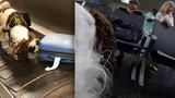 Pes na letišti v akci: Takto vám prozkoumá zavazadla, hledá drogy i peníze