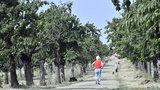 """Praha """"zelená"""": Do roku 2020 chce město vysadit 145 hektarů zeleně"""