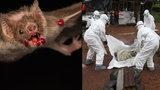 Smrtící pandemii způsobí příště asi netopýří virus. Lidi napadne v Jižní Americe