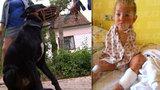 Zvrat v případu útoku psa: Labrador napadl bezrukou Lilienku!