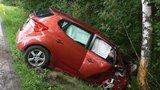 """Stromy """"zabijáci"""": Každoročně usmrtí na 75 řidičů, chystá se plošné kácení?"""