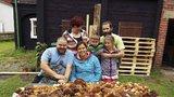 Velká houbová sklizeň: Nasbírali 390 hřibů za 3 hodiny! Rodina z Českolipska vybrakovala les