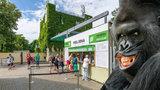 Pražská zoo je podle lidí 5. nejlepší na světě: Jedničkou zůstává v Evropě