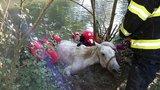 Hasiči zachránili uvízlého koně z bahna, na břeh by se sám nedostal