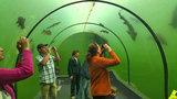 Kuriozita v Modré: Největší sladkovodní tunel v Evropě!