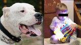 Zoufalá babička Vlastíka (†1): Pes by byl v haj*lu, kdyby kousl mě