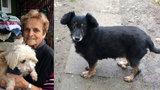 Jaroslava se v Modřanech stará o psy, které nikdo nechce: Psí seniory i zdeptané z množíren