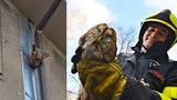 Puštík obecný zmobilizoval hasiče: Dravec visel bezmocně za nohu v okapu domu v Havířově