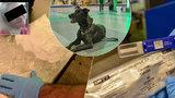 Drogy schované v kufru jako měla Tereza H. (21)? Takhle je odhalují na letišti v Praze