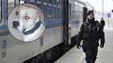Ženu (34) pokousal ve vlaku pes: Jeho majitelé ji nechali ležet v krvi a odešli, zmizela jí i kabelka