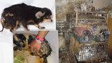 Množírna v Kamenici nad Lipou: Ubohé pejsky zachránili na poslední chvíli. Šokující výčet nálezu