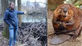 Bobři převezli majitele pozemků: Místo lesa bude mít Lukáš (27) jezera a vůbec mu to nevadí