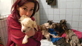 Do krve rozkousaní od blech, omrzlí, poloslepí: Psi z množírny dostali novou šanci