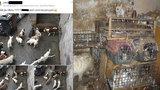 Dům hrůzy v Kamenici: O záchranu psů se pokoušelo několik generací sousedů, pomohla až tahle fotka na Facebooku