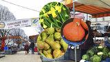 Sezona zahájena: Farmářské trhy na Tyláku dostaly nový kabát, přibudou festivaly jídla i tematické trhy