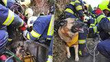 VIDEO: Záchrana z hluboké pasti! Pejsek uvázl ve studni v Hostavicích, vytáhli ho hasiči