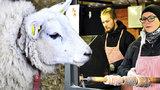 Velikonoční trhy na Kampě: Ovce i koně jsou atrakcí pro turisty, stánky představují tradiční řemesla