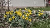Praha 14 hýří barvami: Zkrášlily ji květiny z podzimní výsadby