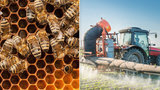 Soudní dvůr EU schválil omezení pesticidů, ohrožují včely. Zákaz se nelíbí Česku