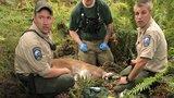Puma zaútočila na cyklisty: Jednomu držela hlavu v tlamě, druhého dohnala a roztrhala