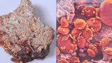 Unikátní výstava na Špilberku: Takhle vypadá 100 let starý válečný chléb pod mikroskopem