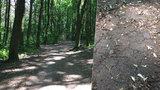 Sucho v pražských lesích je alarmující. Usychají stromy, mohou přijít povodně