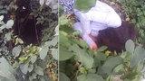 Pohřešovanou dívku našli schoulenou v křoví v Chomutově! Netuší, jak se tam dostala