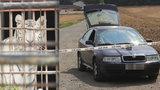 V zoo u Berouska zabíjeli tygry na maso Vietnamcům do restaurací? Policie provádí razii