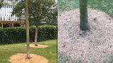 Tajemné kruhy kolem stromů před knihovnou v Dejvicích: Co znamenají?