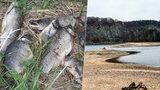 Rybáře děsí sucho: V Úvalech u Prahy už vylovili první uhynulé ryby