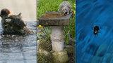 Pražané zachraňují zvířata před tropy: Co doporučují odborníci?
