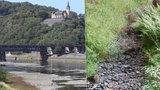 Česko žloutne: Extrémní sucho trápí třetinu republiky. A bude hůř, ukazují data
