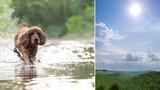 Domácí mazlíčci v tropech: Opalovací krém, stín a zodpovědnost. Pozor na mouchy!