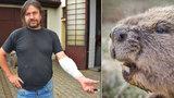 Agresivní bobr pokousal pejskaře (54), nikdo muži nevěřil. Útok potvrdila fotopast