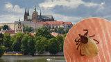 Pražským klíšťatům se kvůli mírné zimě daří: Chytíte je u Vltavy i v parcích