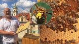 Schytá až 200 žihadel ročně. Zdeněk (54) se stará o pražské včely: Za dobrou péči nás odmění, říká