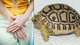 Žena měla ve vagině želvu. Našli ji v ní lékaři, když si stěžovala po pařbě na bolesti břicha