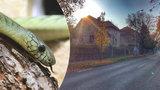 Další nález hada v Hlubočepích: Jen pár metrů od domu mamby! Živý ale nebyl