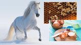 Hustá hříva, pilné včely i sukénky od cibule! Odhadněte letošní zimu podle přírody