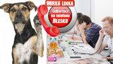 Odpovědi zvířecích odborníků na nejzajímavější dotazy: Jaký pes k dětem? Můj vrčí na partnera! Jak kočce podstrčit léky?